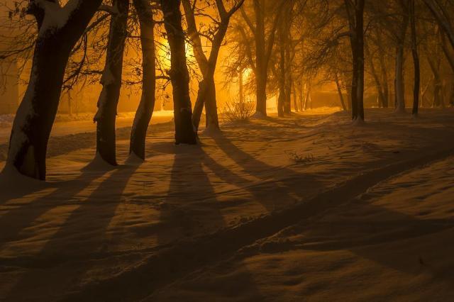 ніч у лісі